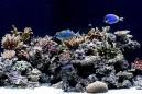 Akwaria morskie